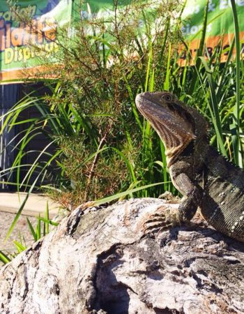 Australian Wildlife Displays