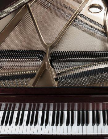 Alex Hilberts Music Tuition